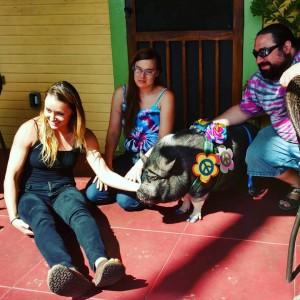Pig at Te Mana
