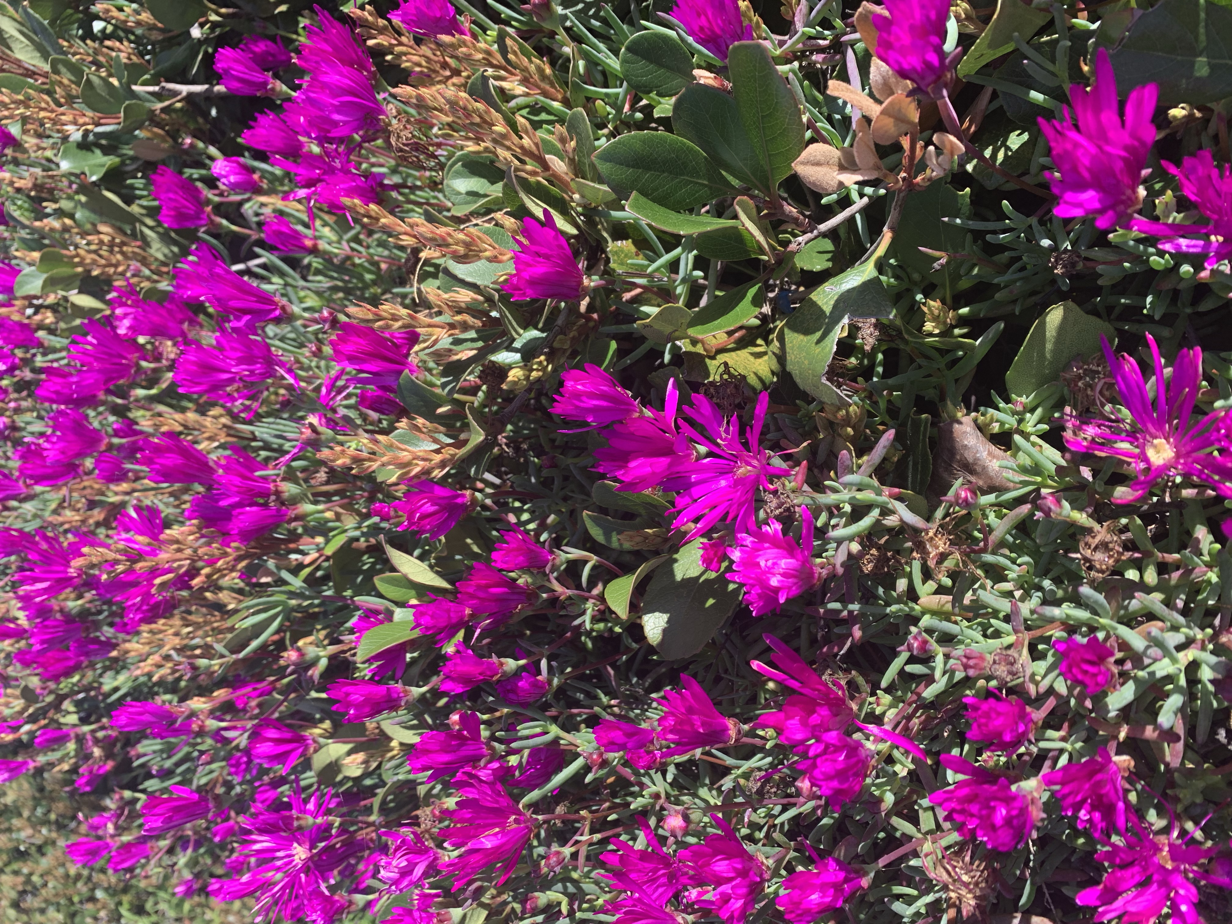ATTACHMENT DETAILS Spring-Flowers-Ocean-Beach-San-Diego